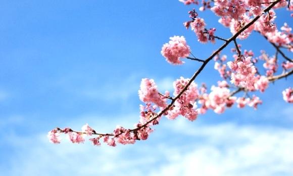 cherry-sky